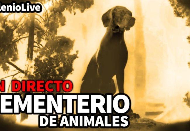 Milenio Live: Cementerio de animales