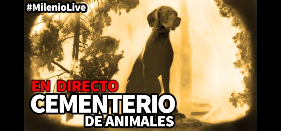 Milenio Live: Cementerio de animales - INSOMNIA