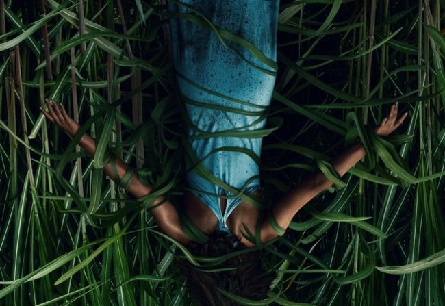In the Tall Grass: Rueda de prensa en Sitges 2019